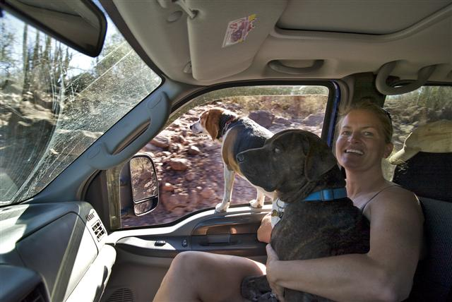 Can Dogs Ride On An Rv While Driving